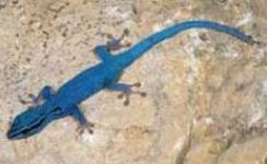 Tiere reptilien for Blaue teichfische