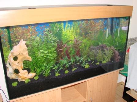 120x60x60cm_aquarium_erle