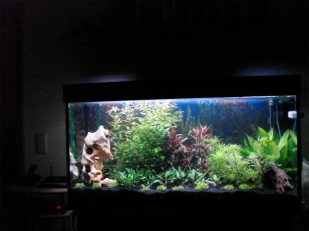 120x60x60cm_aquarium_erle10