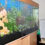 120x60x60cm_aquarium_erle2