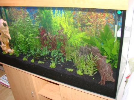 120x60x60cm_aquarium_erle3