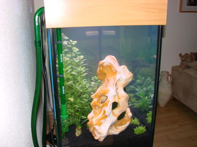 120x60x60cm_aquarium_erle4