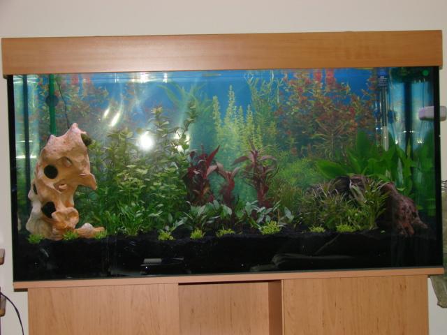 120x60x60cm_aquarium_erle5
