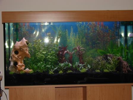 120x60x60cm_aquarium_erle6