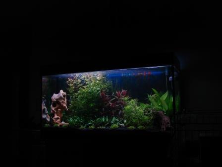 120x60x60cm_aquarium_erle7