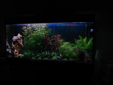 120x60x60cm_aquarium_erle8
