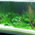 140er_unterwasserlandschaft