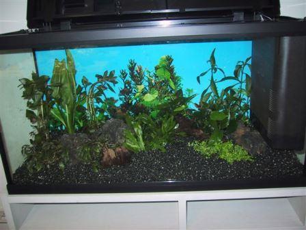 80er-set- aquarium1