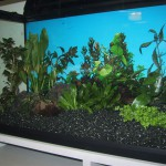 80er-set- aquarium3