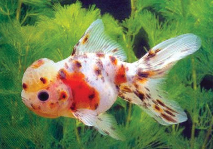 Kaltwasserfische for Muscheln im gartenteich